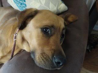 Ella - Beautiful 2 year old cross breed girl - In Oxon Ella03