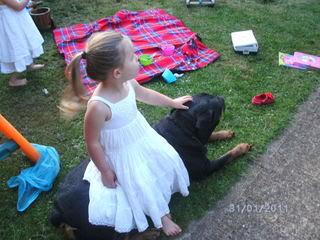 Ellie - 8 year old Rottweiler - Child, cat and dog friendly! (In Berks) Ellie02