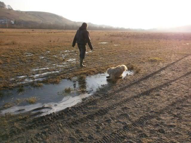Heston - 2 year old Pug cross Tibetan Terrier 426226_362997623711740_100000045157626_1458451_1617610128_n