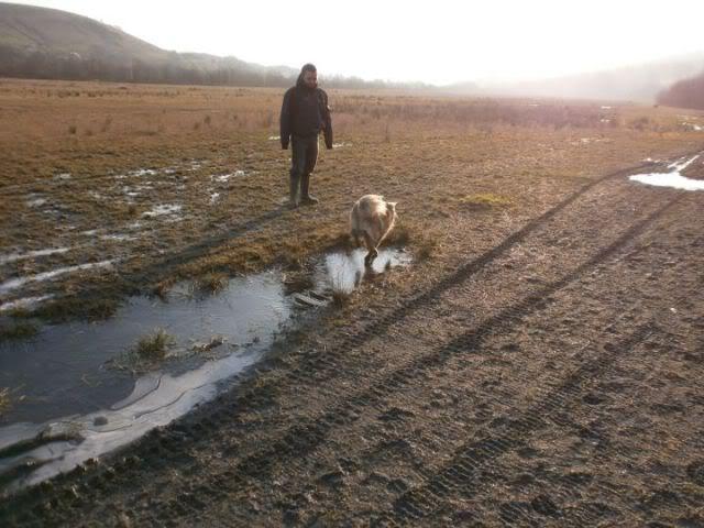 Heston - 2 year old Pug cross Tibetan Terrier 427153_362998593711643_100000045157626_1458455_735272666_n