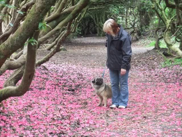 Heston - 2 year old Pug cross Tibetan Terrier 551739_476256539055998_1078273344_n