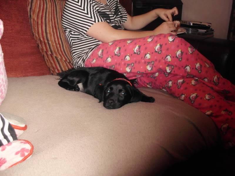 Holly - 10 week old Labrador cross DSCI0393