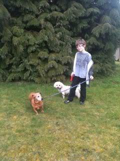 Lucy & Morris,  Dachshund x & Bichon, 10 years old LucyMorris01