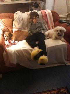 Lucy & Morris,  Dachshund x & Bichon, 10 years old LucyMorris02