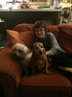 Lucy & Morris,  Dachshund x & Bichon, 10 years old LucyMorris03
