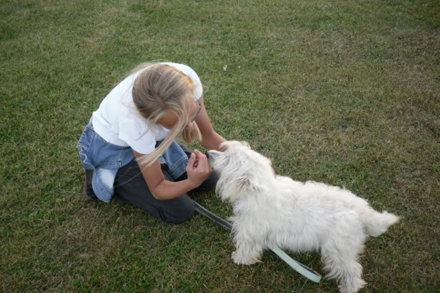 Jade - Pretty 3 year old West Highland Terrier - In Kent SDC10651