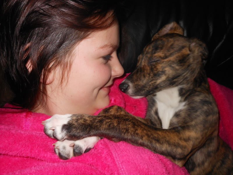 Nutmeg - 9 week old Lurcher pup December2012Camera003