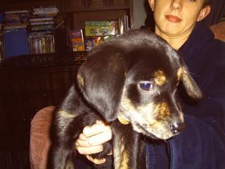 Magic - 10 week old Labrador Cross Magic03