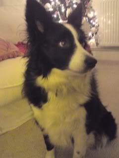 Missie - Beautiful 5 year old Border Collie Missie08-1