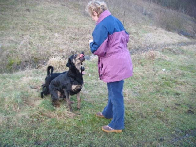 Tyson - 18 month old Doberman cross Labrador - Good with kids,cats+dogs! 2011_0111dogsrescue0049