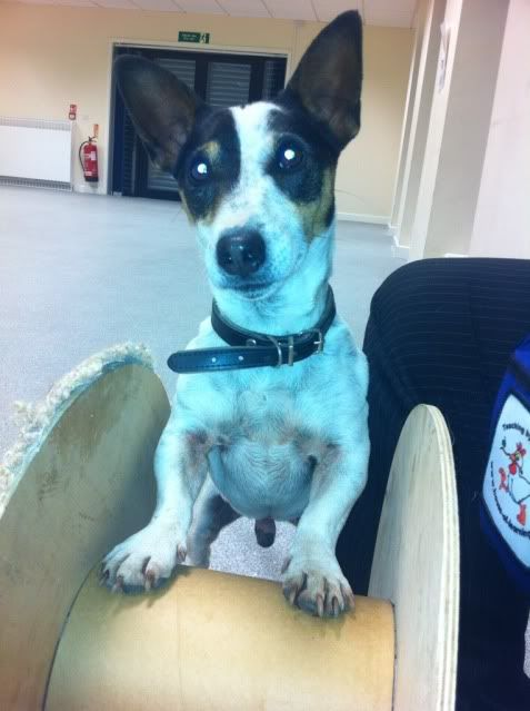 Tick - 5 year old JRT looking for an outdoor home C642CE26-17BD-4E7B-BDC1-7C9AF8B4AC65-1040-0000013D682C7C4C