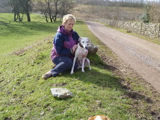 Spud - 6 year old Whippet - dog and child friendly Spud02