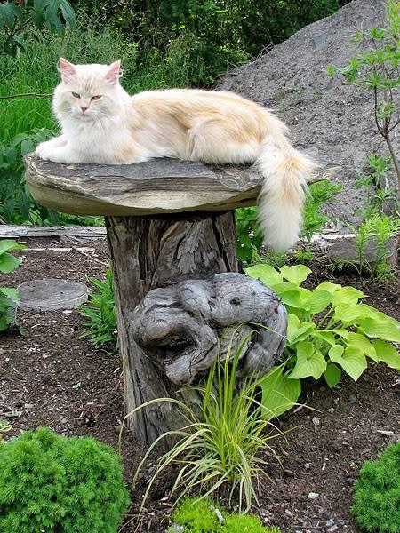 graminées et chatons Juillet2008003