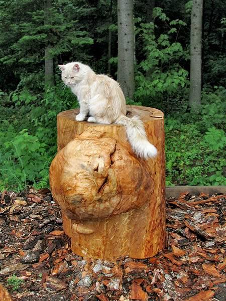 graminées et chatons Juillet2008023