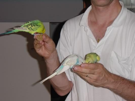 Mes 3 perruches DSC09853po
