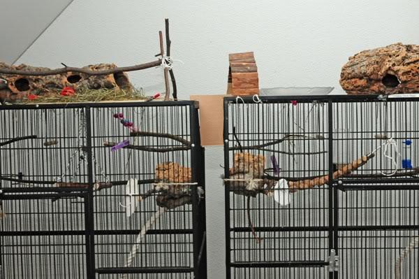 8 perruches apprivoisées DSC_3716cI
