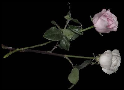 des fleurs, méli-mélo 0b2d660e82
