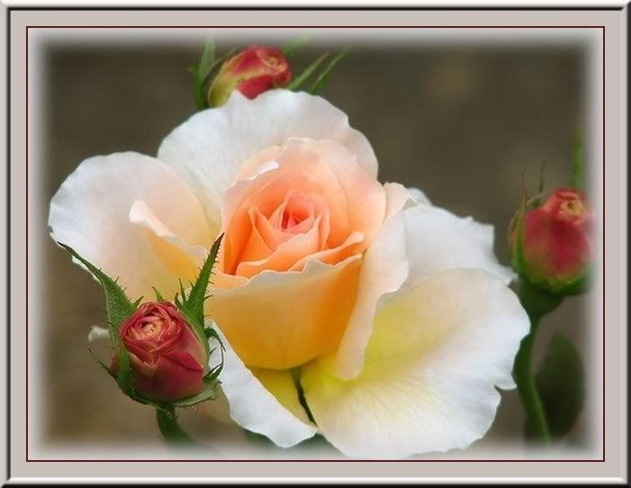 des fleurs, méli-mélo 2ywzc5w
