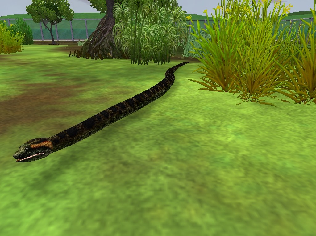Topics tagged under snake on User - Made Creations Anaconda_zps55a5e362
