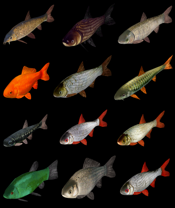 Topics tagged under fish on User - Made Creations Fish_zps0mesikpn