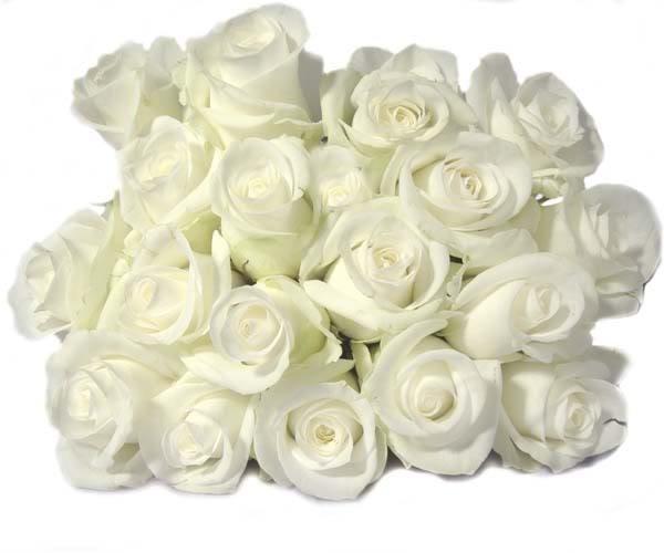 10 وردات مهدات مني لكل عضو من العائلة White20rose202