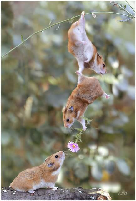 Nature Picture of the Day MOUSE