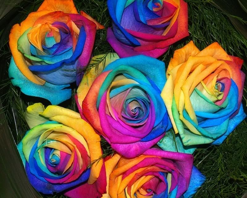 COLORFULL.......... Roses