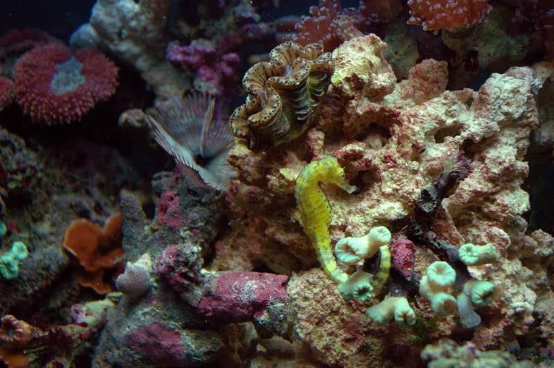 seahorse tank DSC_0049-1