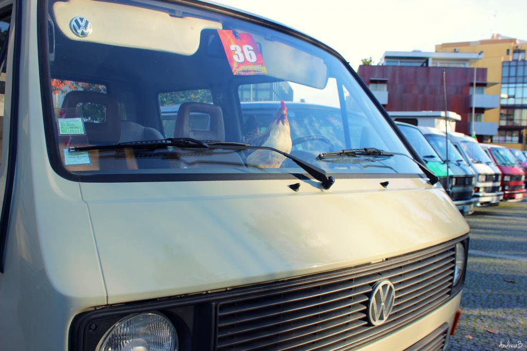 10' Convívio de Natal de Amigos dos VW Clássicos - 13 Dezembro 2014 - Matosinhos - Página 2 IMG_8839_zps1f1e817f