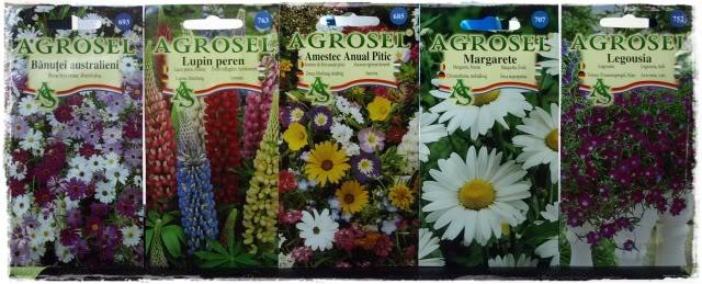 florile din apartament/gradina - Pagina 8 P5061617