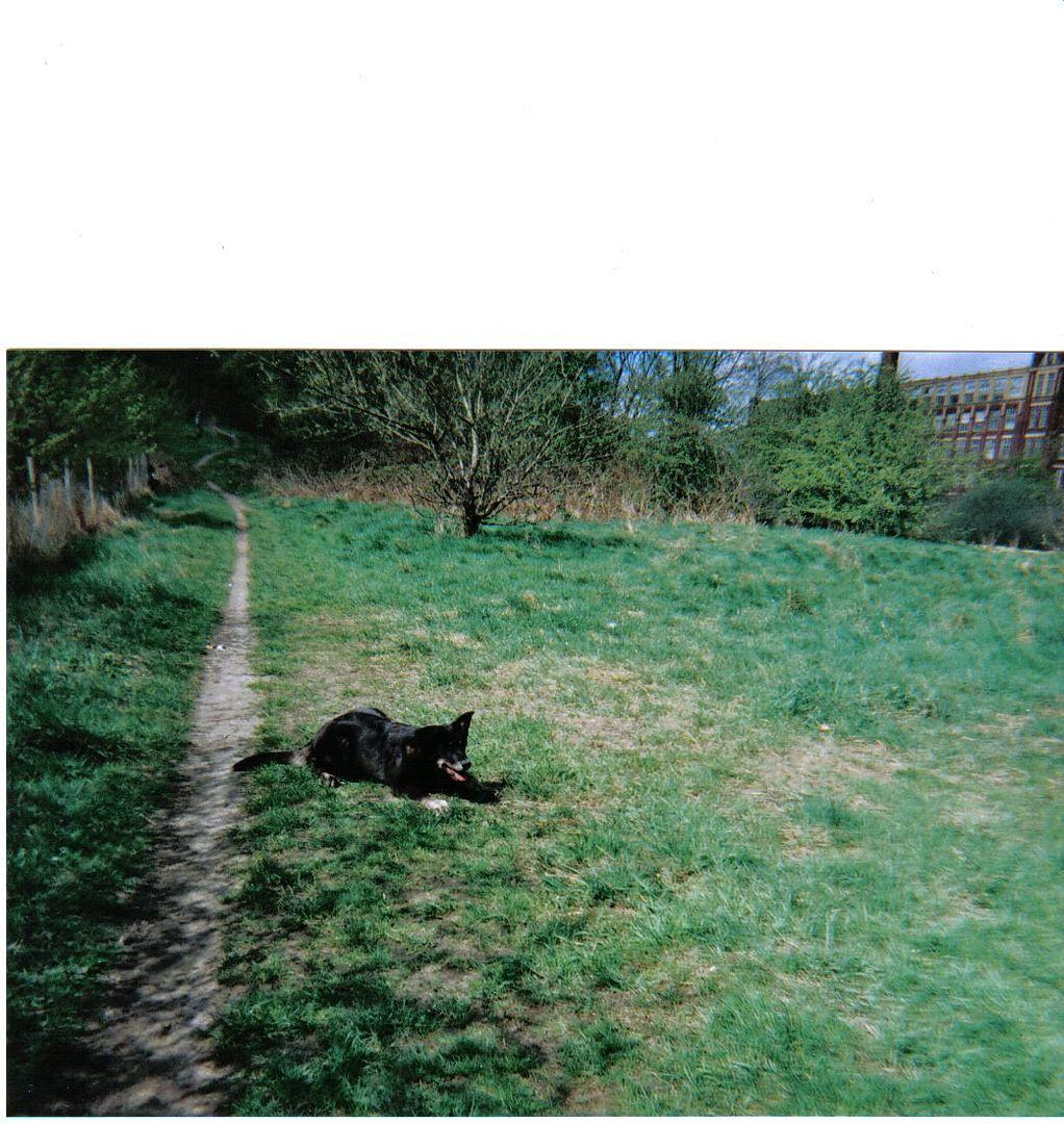 Ute show dog types and  - Page 2 MaelonaMay2006