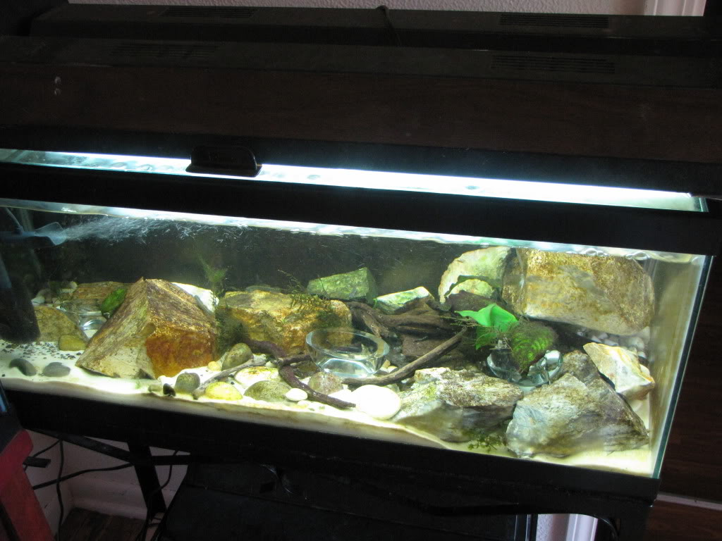 We invite all Aquarists to share their experience on Stiphodon Riverfish026