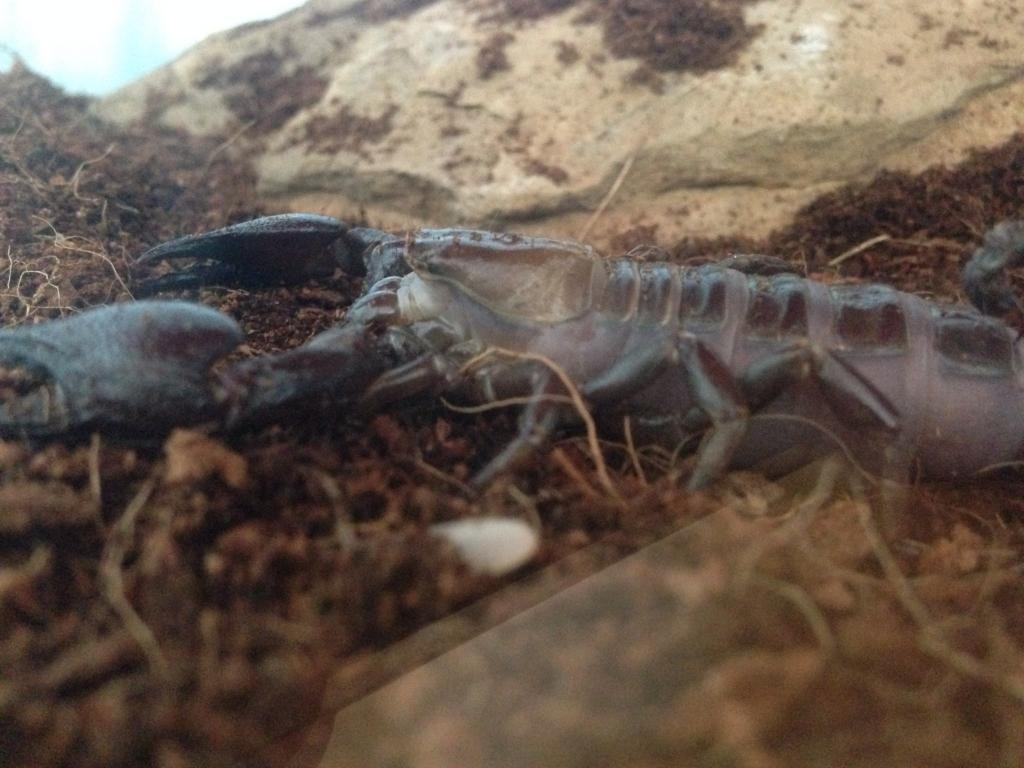 Saving the scorpion Image_zps4cda2259