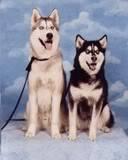 Wolves and Britt Only ^_^ Thtobyandmikala21