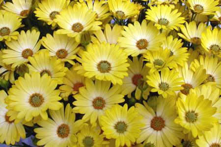 சேனையை அலங்கரிக்கும் பூக்கள் 02 - Page 20 Flowers