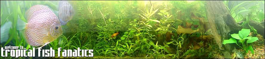 Tropical Fish Fanatics
