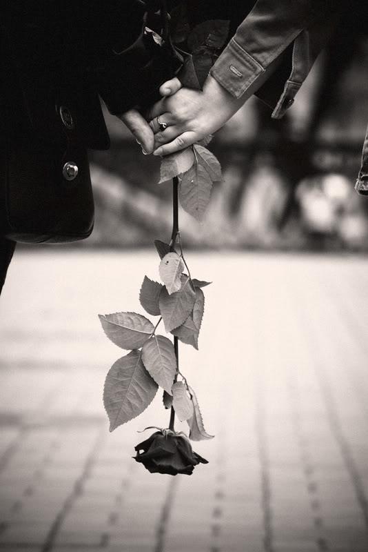 FOTO TË MUAJIT PRILL - Faqe 4 Rose_by_alexkatana