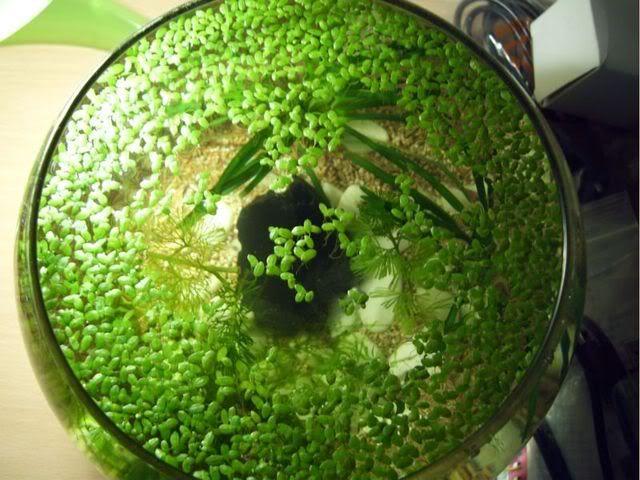 Mi mini esfera DSCI00062