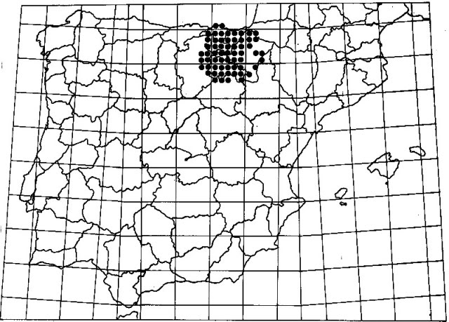 El Visón Europeo. Muslutmapa1