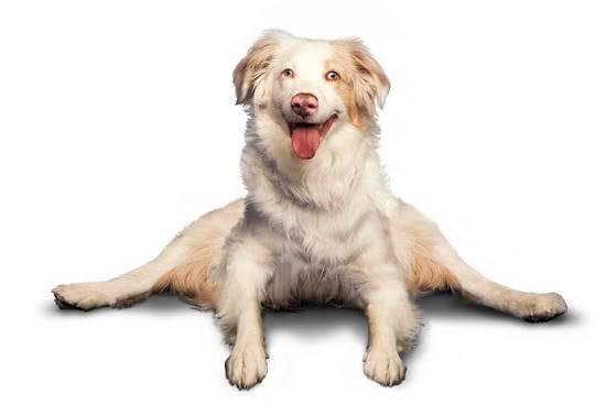 Chó tập Yoga 7