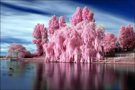 Trees (2) Pink