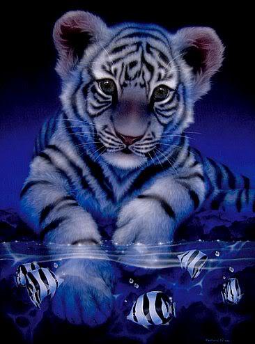 Animal Lover 1235_white-baby-tiger