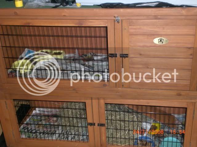 new hog homes/flats Hedgehogs018