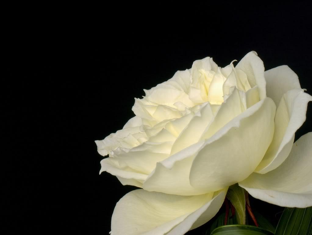 Fotografije cvijeća - Page 39 P2200133