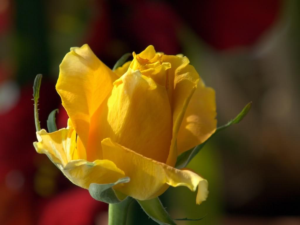 Fotografije cvijeća - Page 39 PA158946