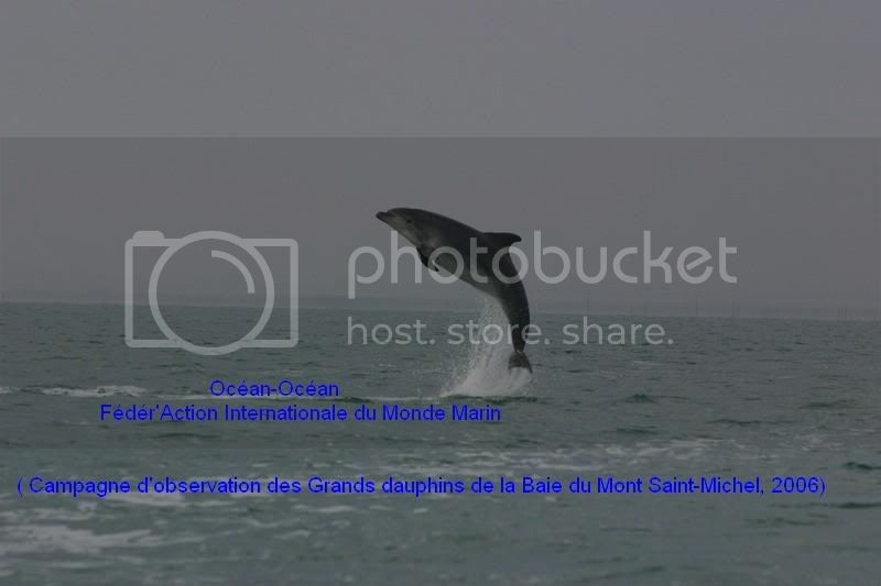 Grands dauphins de la baie du Mont Saint-Michel Stageocean-oceanCancale2006172okok