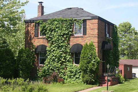 Alex Lustro's House Vines-ivy-covering-house