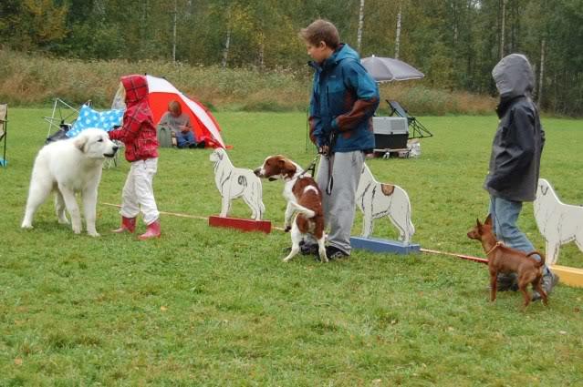 Norsk Pyrenèerhundklubb,Helgelandsmoen 20/9 DSC_0066
