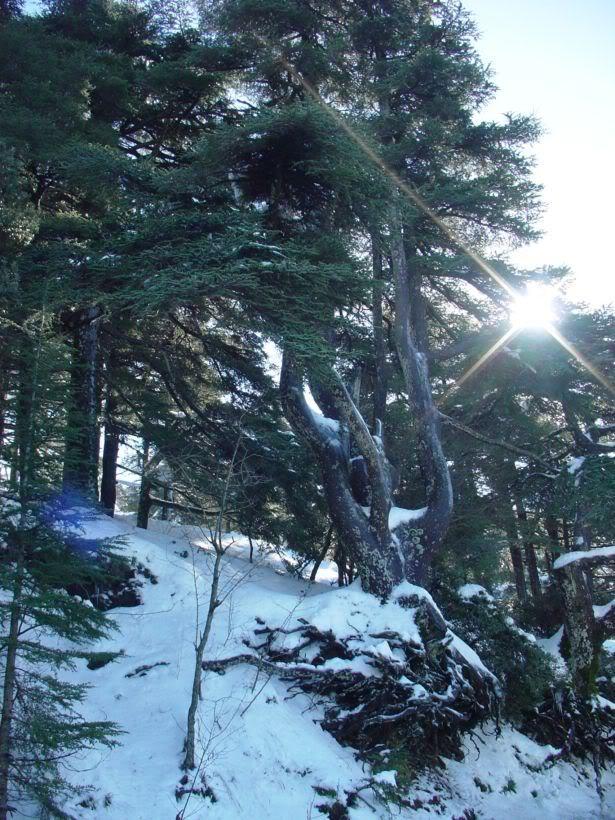 مناطق ثلجية من السياحة الجزائرية   A13
