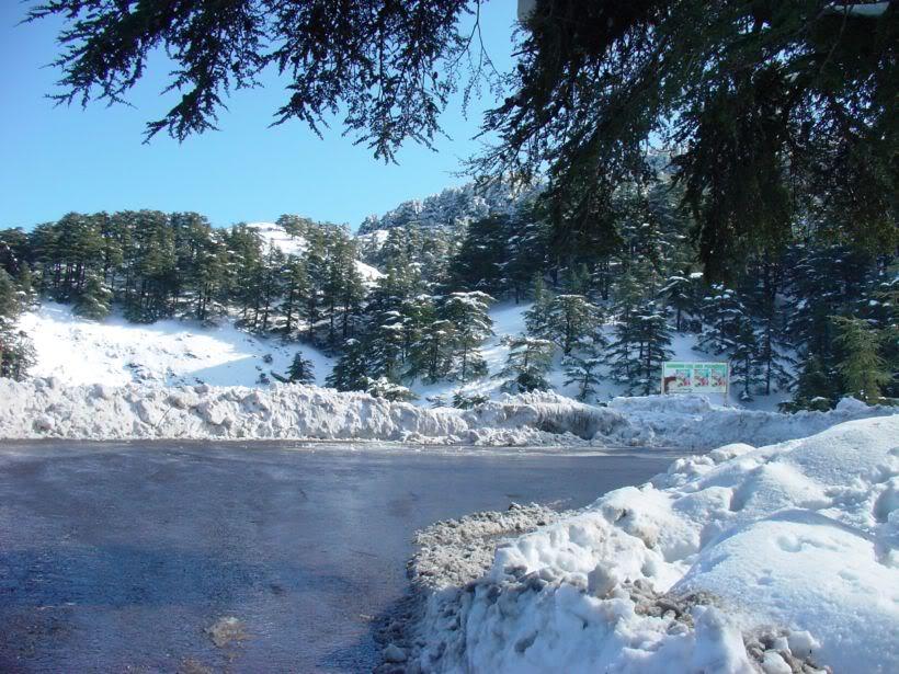 مناطق ثلجية من السياحة الجزائرية   A3